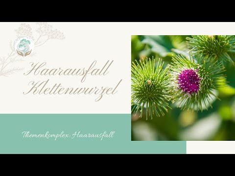 Haarausfall Klettenwurzel - Ellen Langstein